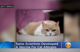 Vaccine For Cat Allergies Developed By Swiss Scientists