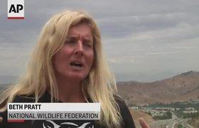 New Calif. freeway bridge to carry wildlife