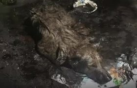 Save a dog that was sinking in tar