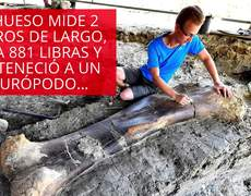 Find the huge bone of a giant dinosaur