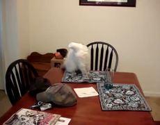 Cat on table FAIL