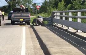 11-foot gator stops traffic on North Carolina road