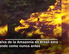 Fires in the Amazon: satellite images show the severity of the disaster