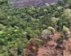 URGENTE, La verdad de lo que pasa en Amazonas