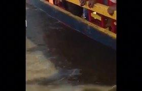 VIDEO - Joven cae de trajinera de Xochimilco y muere