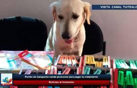 Perrito de Campeche vende plumones para pagar su tratamiento