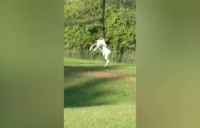 Rare Albino Deer Saved By Firefighters!
