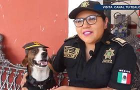 Chilaquil el perro callejero que será policía en Yucatán