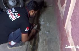 #OMG: Tiny kitten dying in drain, rescued and...Feisty!