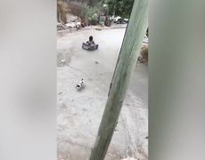 #VIDEO: Cat causes a spectacular accident to a girl