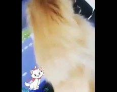 Perro se lanza de carro en movimiento con canción de crystal dolphin