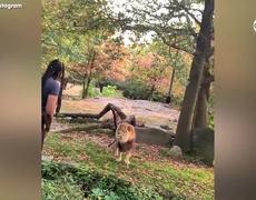 #VIRAL: Mujer irrumpe en habitat de leones en el Zoologico del Bronx