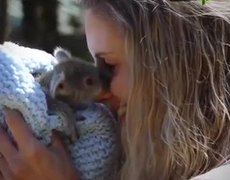 This baby of koala will tender their hearts