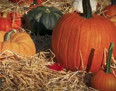 How to Carve a Pumpkin: Jack-o'-Lantern Ideas