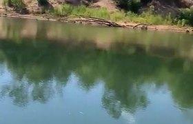 #VIRAL: Close Encounter with a Hidden Saltwater CrocodilE