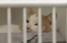 #OMG 80 cats, kittens rescued from overcrowding situations