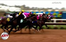 Two racehorses die in full competition