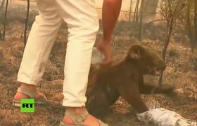 #VIDEO: Woman risks her life to save a koala from fires in Australia