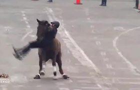 Cae jinete y su caballo durante desfile de la Revolución Mexicana