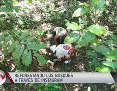 So you can reforest forests through the social network Instagram