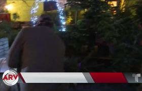 Gardener rents Christmas trees to prevent them from ending up in the trash