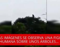 Captan a La Llorona encima de un árbol y lo graban en video