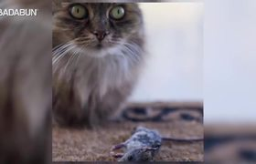 #OMG: chilling reason why cats bring dead animals to the house