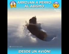 #OMG: Throw a dog from a plane