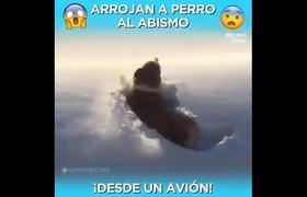 #OMG: Arrojan a un perro desde un avión