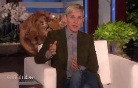 The Ellen Show. Influential YouTuber Nikkie de Jager Sits Down With Ellen
