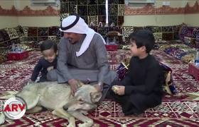 Family feeds and raises wolves as if they were puppies