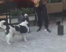 #VIRAL: Dog joins street saxophonist and together they make music
