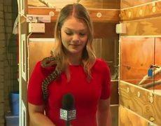 #VIRAL: Australian reporter screams as snake strikes mic
