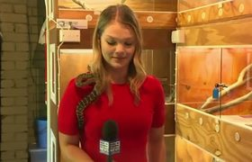 #VIRAL: Australian reporter screams as snake strikes mic