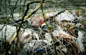 #DROSS: 3 hallazgos aterrorizantes hechos en bosques