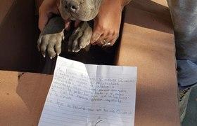 Niño enterneció a las redes al dejar a su cachorro a las puertas de un refugio para evitar que su padre siguiera maltrat