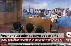 Dog tests Coronavirus positive in Hong Kong