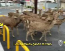 ANIMALS TAKE THE STREETS: side B of the QUARANTINE by CORONAVIRUS