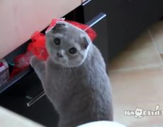VIRAL VIDEO Cat Is Caught Stealing From Drawer