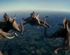 Amazing Animals Crazy Commercial
