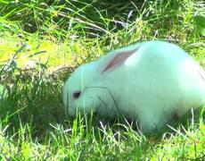 Cute White Bunny Walking
