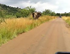 Baby Elephant vs Safari Jeep