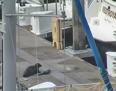 Seal Birth at Elliott Bay Marina Seattle