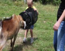 Goat hates childrens