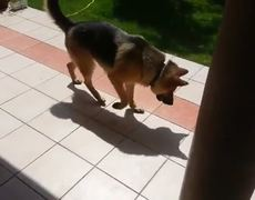 Crazy Dog Tries To Fight His Shadow