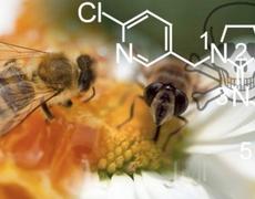 37 million bees were found dead in Elmwood Ontario Canada