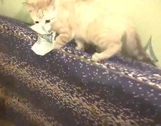 OMG Kitten Refuses To Return Stolen Money