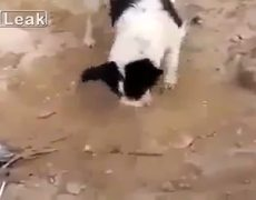 Dog buries dead puppy in the Middle East