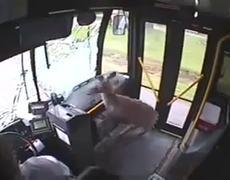 Bus CCTV Video Deer Crashes Through Windshield of City Bus