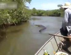 Find Giant Snake in Brazils River